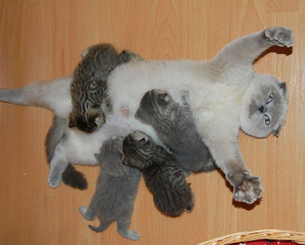 funny-animal-motherhood-photos-cats-dogs-pet-moms-4-5767d6a69d572__605.jpg